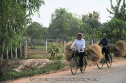 women transporting wheat by bike in Cambodia