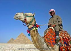 View of the Giza pyramids with camel in the foreground, Egypt