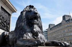 Lion statue at the base of the Nelson Column, Trafalgar Square,London,England