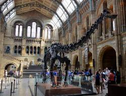 The Museum of Natural History,London, England