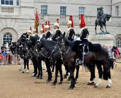 Horse Guard parade, Buckingham Palace,London,England