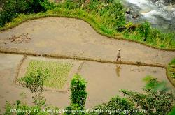 Philippines, northern Luzon, Ifugao, rice terraces, rice paddies, agriculture