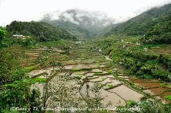 Philippines, northern Luzon, Ifugao, rice terraces, image 3