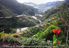 Philippines, northern Luzon, Ifugao, rice terraces, image 2
