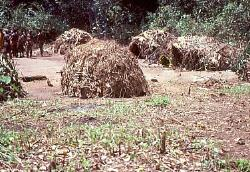 Pygmy camp, Central African Republic
