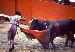 Bullfight, Mexico City