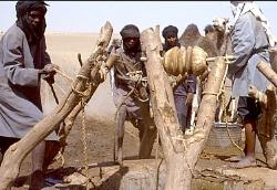 Tuareg nomads drawing water from a well, southern Sahara, Niger