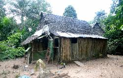 Abandoned homestead in a jungle clearing near the Tambopata River, Amazon region