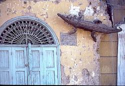 Crocodile mummy on wall, town of Luxor, Egypt