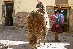 Quetchua woman with a llama, Cusco, Andes Mts